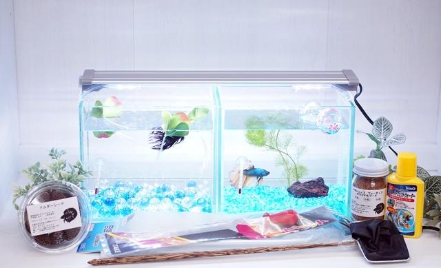 ショーベタ飼育スターターセット~水槽2点横置き、ヒーターなし【送料無料】~新LEDライト導入でお安くなりました!