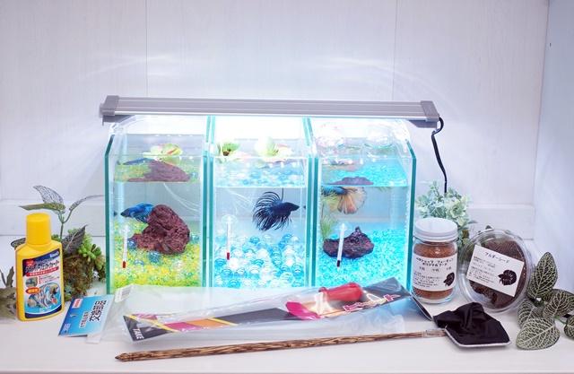 ショーベタ飼育スターターセット~水槽3点縦置き用ヒーターなし【送料無料】~新LEDライト導入でお安くなりました!
