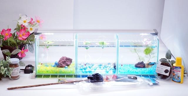 ショーベタ飼育スターターセット~水槽3点横置き用マルチパネルヒーター付【送料無料】~新LEDライト導入でお安くなりました!