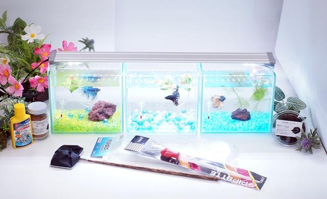 ショーベタ飼育スターターセット~水槽3点横置き、ヒーターなし【送料無料】~新LEDライト導入でお安くなりました!