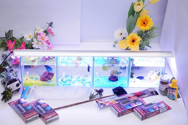 ショーベタ飼育スターターセット~水槽4点横置き用ベタ専用ヒーター付【送料無料】~新LEDライト導入でお安くなりました!