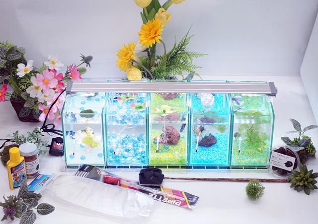 ショーベタ飼育スターターセット~水槽5点縦置き用マルチパネルヒーター付【送料無料】~おすすめ!新LEDライト導入でお安くなりました!