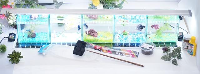 ショーベタ飼育スターターセット~水槽5点横置き用マルチパネルヒーター付【送料無料】~