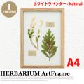 リーフアート フラワーアート ハーバリウム アートフレーム A4 ホワイトラベンダー ナチュラル