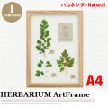 リーフアート フラワーアート ハーバリウム アートフレーム A4 ハコネシダ ナチュラル