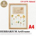 リーフアート フラワーアート ハーバリウム アートフレーム A4 ミヤコグサ ナチュラル