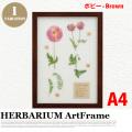リーフアート フラワーアート ハーバリウム アートフレーム A4 ポピー ブラウン