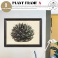 Plant Frame Type-A DULTON'S