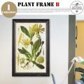 Plant Frame Type-B DULTON'S