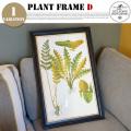 Plant Frame Type-D DULTON'S