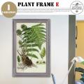 Plant Frame Type-E DULTON'S
