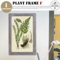 Plant Frame Type-F DULTON'S