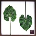 Elephant ear leaf アートフレーム ジェイアイジー(JIG) IFF10025【送料無料】