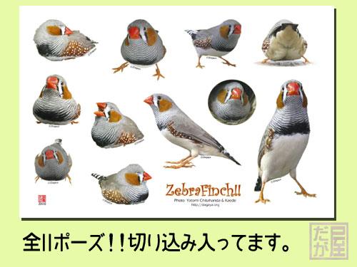 【だが屋】型抜きシール/キンカチョウ◆クロネコDM便可能