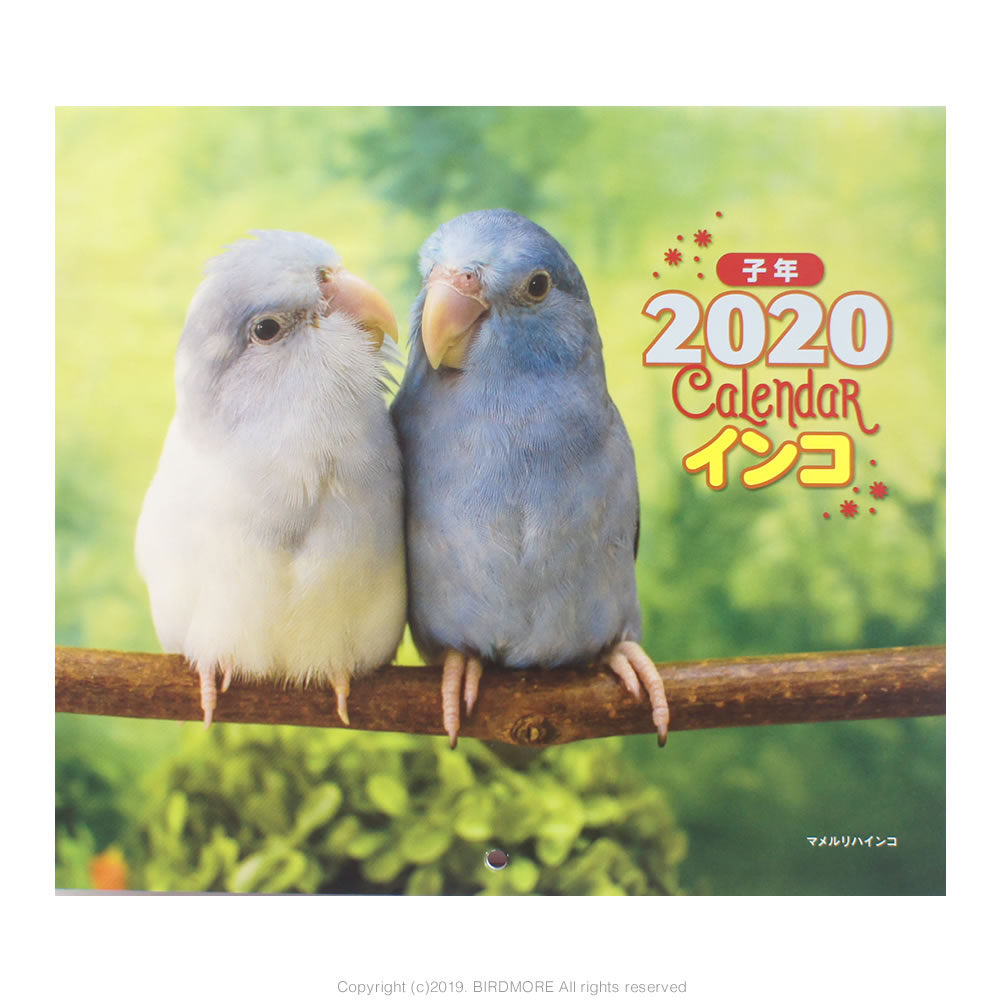 9995541【誠文堂新光社】 2019年ミニカレンダー/インコ ◆クロネコDM便可能