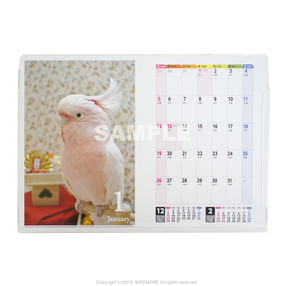 9995552【イーフェニックス】A5コンパニオンバード鳥写真カレンダー ◆クロネコDM便可能