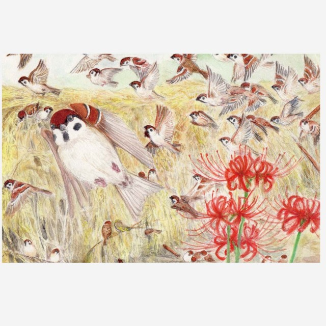 【親馬鹿倶楽部】ハガキ/秋の雀の大群◆