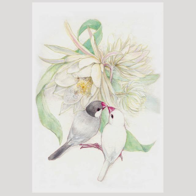 【親馬鹿倶楽部】ポストカード・月下美人/文鳥◆