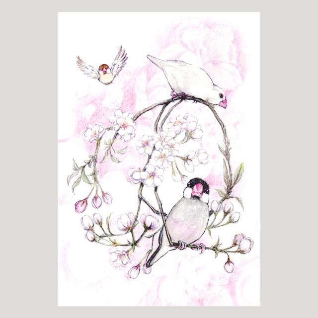 【親馬鹿倶楽部】ポストカード・桜/文鳥三羽◆