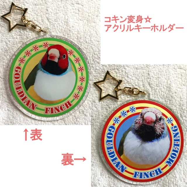 【Feather Tail】アクリルキーホルダー/コキン変身