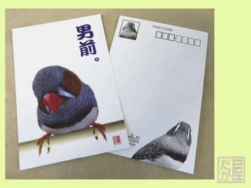 【だが屋】★ポストカード/キンカチョウ4・男前◆