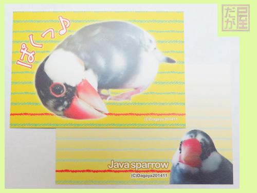 【だが屋】ポストカード/文鳥・桜6・ぱくっ◆