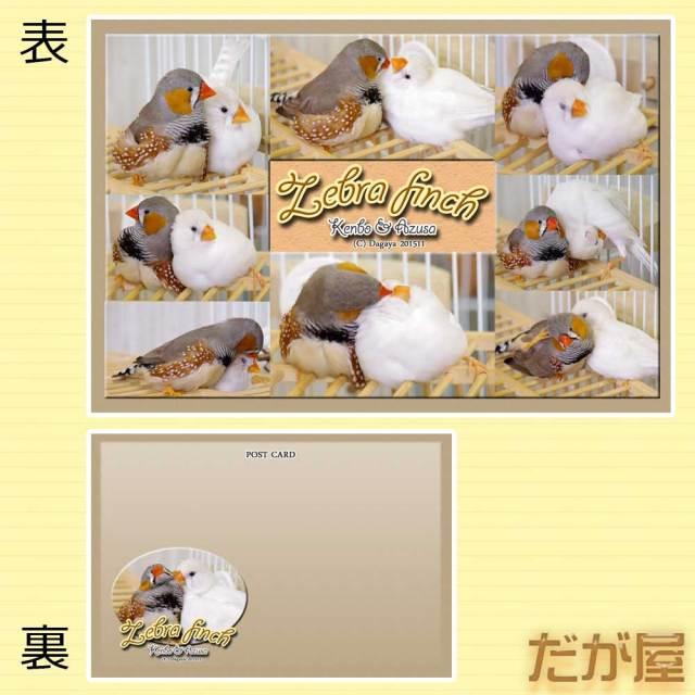 【だが屋】ポストカード/キンカチョウ17・リア充◆