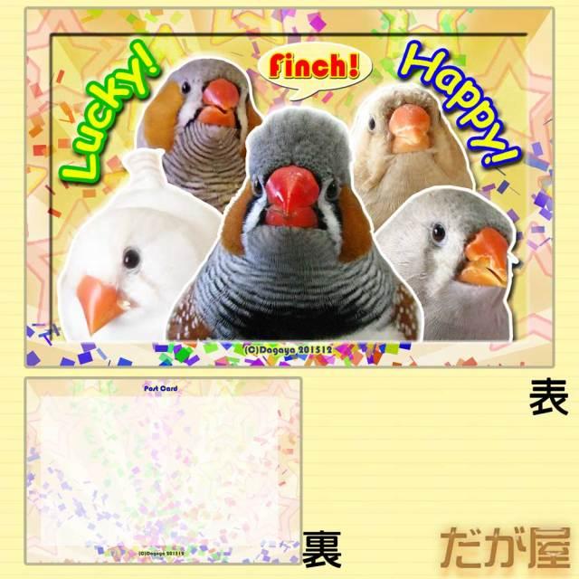 【だが屋】ポストカード/キンカチョウ18・Lucky!◆