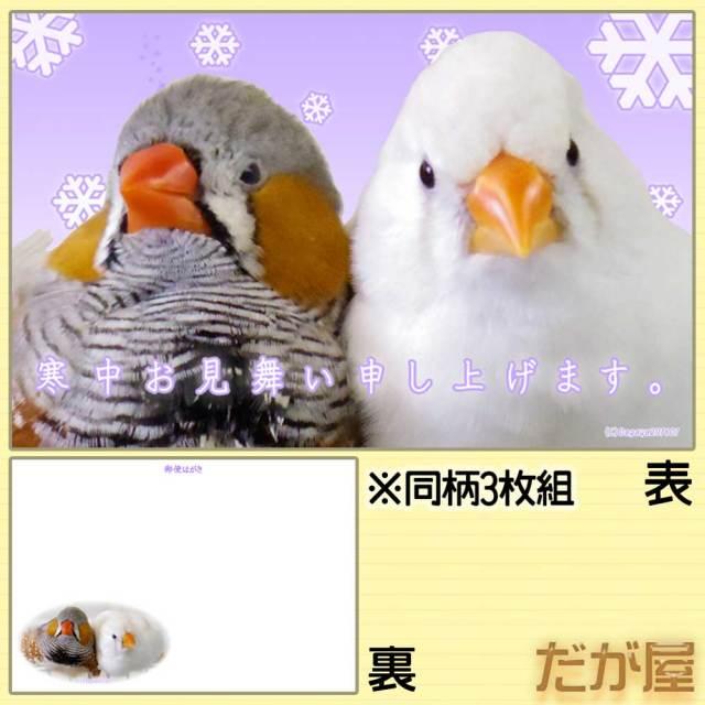 【だが屋】ポストカード/キンカチョウ20・寒中見舞い◆