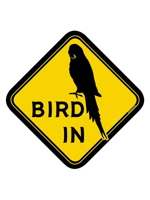 9992023【BMオリジナル】BIRD IN ステッカー セキセイ◆