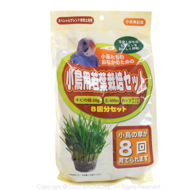 9993347【アラタ】小鳥用若葉栽培セット