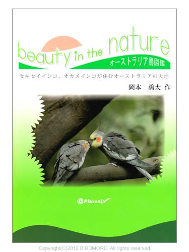 9993879【イーフェニックス】beauty in the nature オーストラリア野生インコ・オウム類の写真集◆