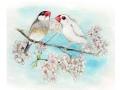 【親馬鹿倶楽部】ポストカード・桜/文鳥・桜&白◆クロネコDM便可能