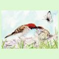 【親馬鹿倶楽部】ハガキ/雀親子・水彩◆クロネコDM便可能