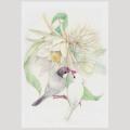【親馬鹿倶楽部】ポストカード・月下美人/文鳥◆クロネコDM便可能