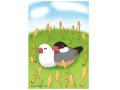 【FT&ぶんちょ屋】ポストカード・つくし/文鳥◆クロネコDM便可能