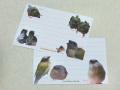 【Feather Tail】コキンひなメモ帳/コキンチョウ◆クロネコDM便可能