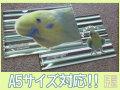 【だが屋】A5クリアファイル/セキセイ・パステルグリーン系◆クロネコDM便可能