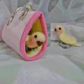 【カリーノピコ】★羊毛インコ/コザクラ・黄幼鳥