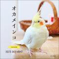 9995538【誠文堂新光社】2021年 大判カレンダー オカメインコ