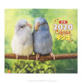 9995541【誠文堂新光社】 2020年ミニカレンダー/インコ ◆クロネコDM便可能