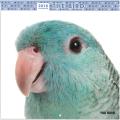 9995598●特価●【artlist】2018年カレンダー/THE BIRD