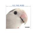 9995599【artlist】2018年小型カレンダー/THE BIRD◆クロネコDM便可能