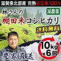 棚田米 年間10kg×6回