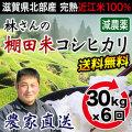 棚田米 年間30kg×6回