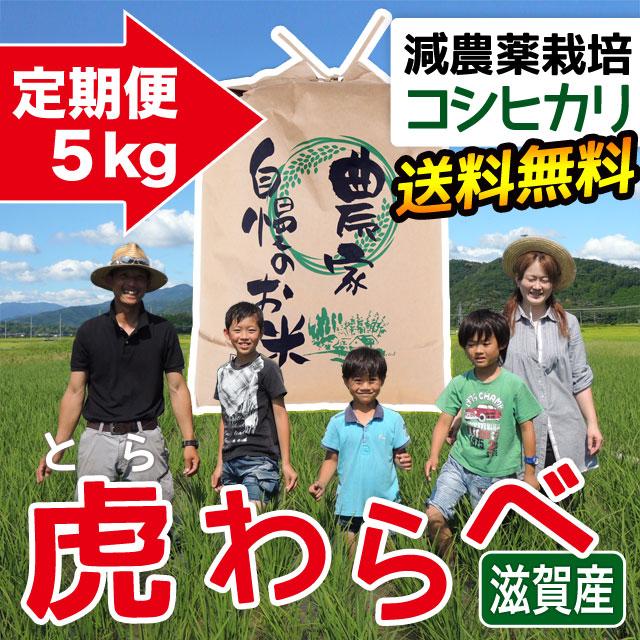 年間 減農薬コシヒカリ 虎わらべ 5kgコース