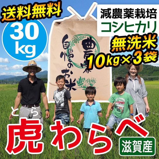 減農薬コシヒカリ 虎わらべ 30kg