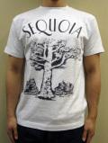 "GASBOOK  USA国立公園 Tシャツ ""SEQUOIA"""