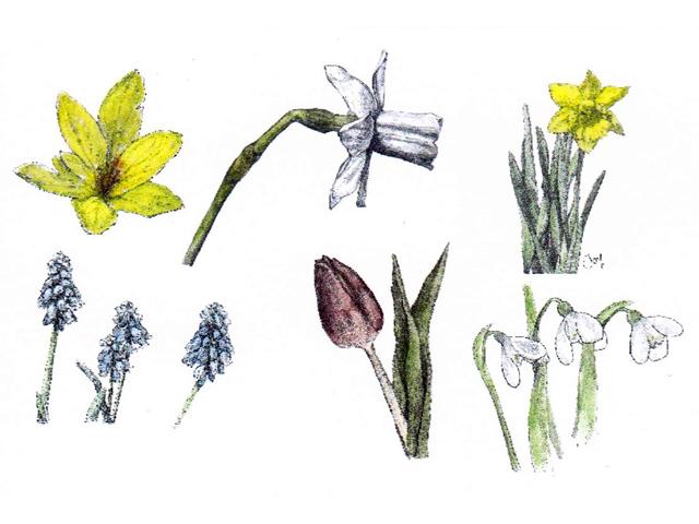 ミニカード 花