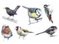 ミニカード 鳥
